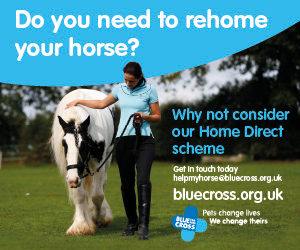 Blue Cross 2020 A (South Wales Horse)