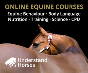 Understand Horses (South Wales Horse)